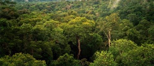 Amazoni